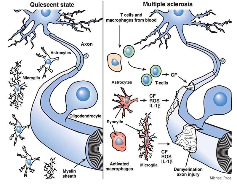 viral-protein